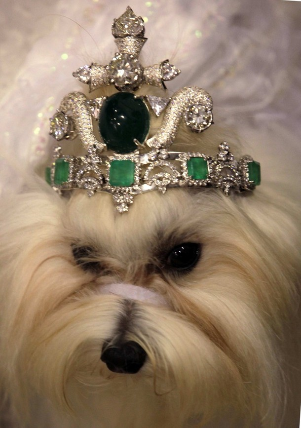 top-5-most-expensive-dog-collars_dog-tiara  TOP 5: Most expensive Dog Collars top 5 most expensive dog collars dog tiara